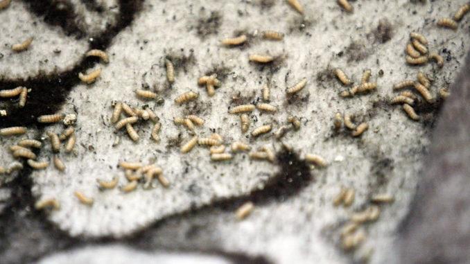 Lekarz nie wytrzymał. Napisał o pacjentach z robakami w pachwinach. Burza w sieci