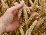 Za przyjaźń PIS-u z Ukrainą polscy rolnicy zapłacą miliardy złotych