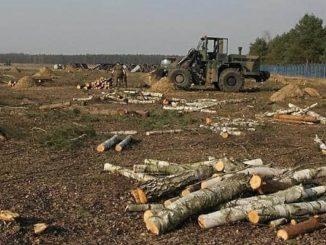 USA rozprawią się z chronionymi lasami w Polsce