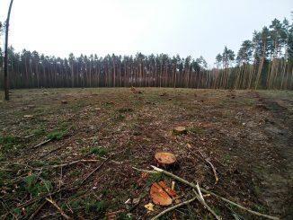 Lasy poza kontrolą. Jak społeczeństwu wyślizguje się z rąk kontrola naszym wspólnym dobrem